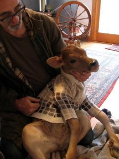 Blog cow sweater